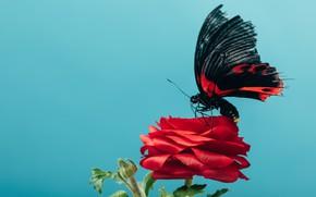 Картинка цветок, бабочка, Макро