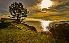 Картинка море, небо, трава, солнце, облака, дерево, рассвет, берег, горизонт