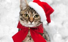 Картинка Взгляд, Кошка, Кот