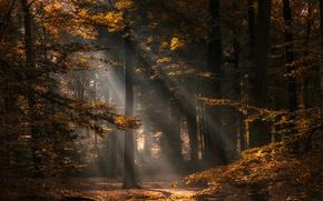 Обои осень, лес, деревья, Нидерланды, Netherlands, North Brabant, Северный Брабант