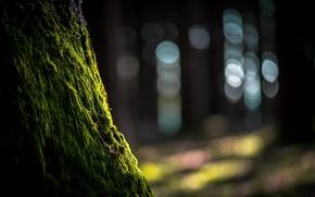 Картинка природа, дерево, мох