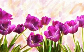 Картинка цветы, фон, рисунок, графика, обработка, светлый, картина, арт, фиолетовые, тюльпаны, живопись, рисованные, мазки, сиреневые, цифровая …