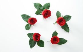 Обои коллаж, роза, лепестки