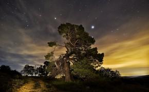 Картинка ночь, природа, дерево