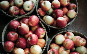 Картинка яблоки, еда, фрукты