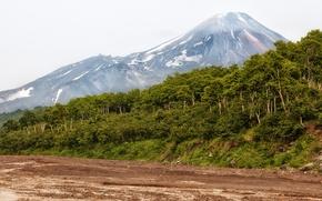 Картинка лес, деревья, горы, Россия, Камчатка
