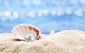 Картинка ракушка, жемчуг, sunshine, beach, sea, sand, seashell