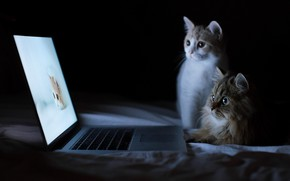 Обои Cats, funny, animals, computer, laptops, kittens, cute, felines