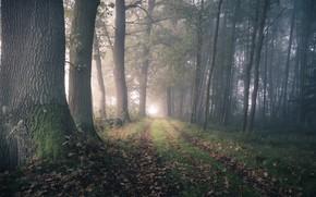 Обои дорога, осень, лес, туман