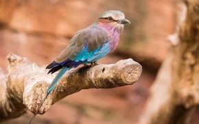 Картинка природа, птица, ствол, радужная, сизоворонка