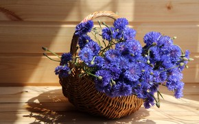 Обои дача, васильки, композиции, цветы, лето