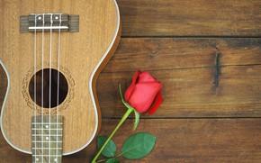 Картинка цветок, роза, гитара, Музыка