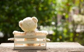 Картинка игрушка, сад, медведь, bear, garden, teddy, одинокий, cute, lonely