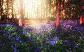 Картинка лес, свет, цветы, весна