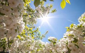 Картинка небо, солнце, цветы, красота, весна