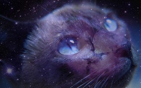 Картинка кошка, взгляд, космос