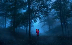 Обои лес, деревья, ситуация, фонарь, ночь, девушка