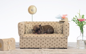 Картинка цветы, диван, спит, щенок, чихуахуа, Dogs, Sleep