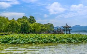 Картинка Природа, Озеро, Беседка, Китай, Пейзаж, Лотосы