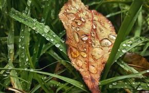 Картинка осень, трава, листья, капли, макро, лист, дождь, настроение, grass, rain, drop, autumn, leaves, fall