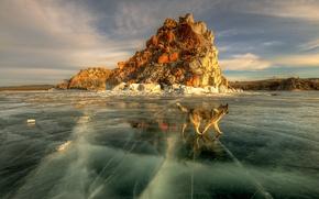 Обои весна, солнце, лёд, Байкал, озеро, собака