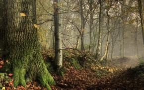 Картинка Природа, Деревья, Лес, Стволы