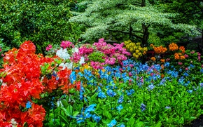 Картинка зелень, деревья, цветы, сад, Канада, солнечно, разноцветные, кусты, рододендрон, Butchart Gardens