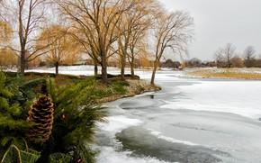 Картинка зима, деревья, лёд