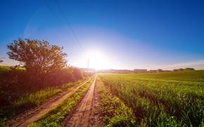 Картинка дорога, зелень, поле, лето, небо, трава, солнце, рассвет, кусты
