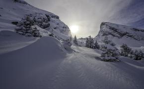 Картинка зима, снег, горы, Швейцария, ели, Альпы, сугробы