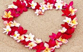 Картинка цветы, flowers, floral, сердце, плюмерия, beach, пляж, romantic, песок, sand, love, heart, plumeria