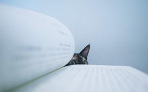 Картинка глаза, кот, подглядывает