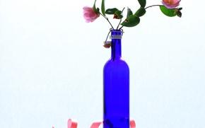 Обои бутылка, камелия, натюрморт, цветы