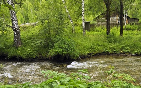 Картинка Зелень, Природа, Трава, Лес, Nature, Grass, Речка, River, Forest