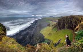 Обои пейзаж, скалы, птица, Исландия, паффин, море, пляж, тупик