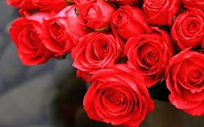 Обои листья, роза, лепестки, бутон, rose, цветение, leaves, petals, blossoms, Bud