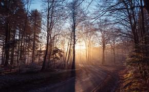 Картинка дорога, лес, свет