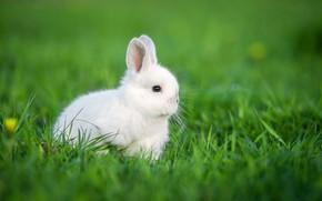 Картинка Кролик, травка, Малыш