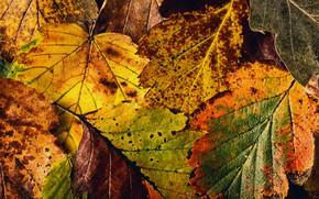 Обои текстура, осень, листья
