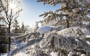 Картинка Sky, Winter, Snow, Dawn, View, Branch