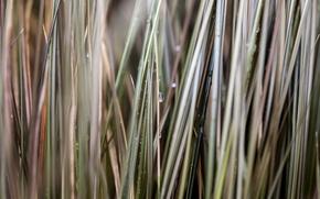 Картинка трава, капли, макро, размытие, травинки