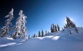 Обои winter, blue, деревья, елки, зимний пейзаж, snow, парк