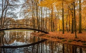 Обои парк, отражение, мост, деревья, Brummen, Voorstonden, Брюммен, Ворстонден, Netherlands, Нидерланды, озеро, осень