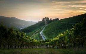 Картинка дом, гора, утро, виноградник
