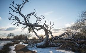 Картинка зима, небо, дерево