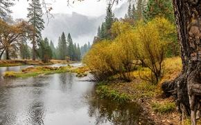 Картинка осень, лес, деревья, горы, туман, река, скалы, утро, США, Йосемити, кусты