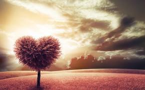Картинка дерево, сердце, луг