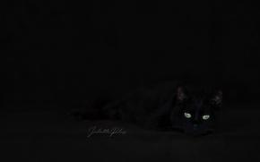 Обои кошка, взгляд, дом