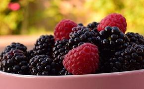 Картинка лето, макро, природа, ягоды, малина, фон, еда, чашка, миска, много, ежевика, сочная, вкусно, размытый, пиала
