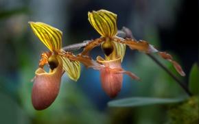 Картинка макро, природа, лепестки, экзотика, орхидея